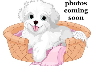puppy-comingsoon